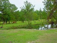 Peaceful Pasture200x.jpg